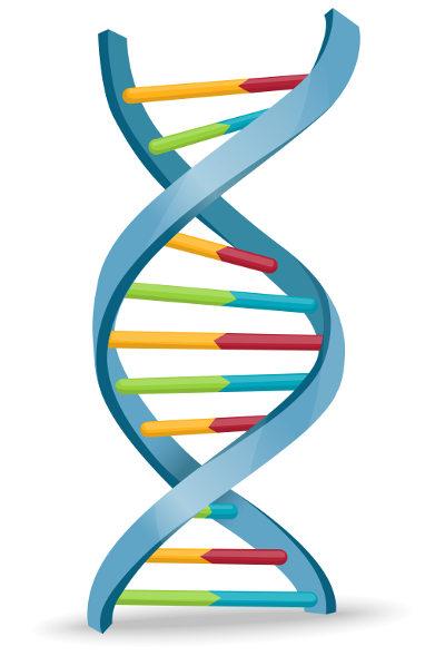 O DNA apresenta uma estrutura semelhante a uma escada helicoidal.