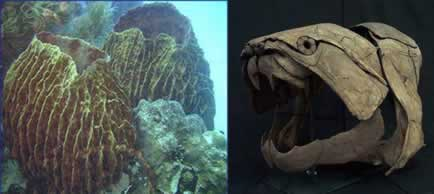 Esponjas e peixes, seres primitivos.