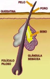 Em nosso couro cabeludo há cerca de cinco milhões de folículos pilosos.
