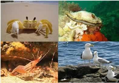 O manguezal abriga espécies de animais que o utiliza para reprodução