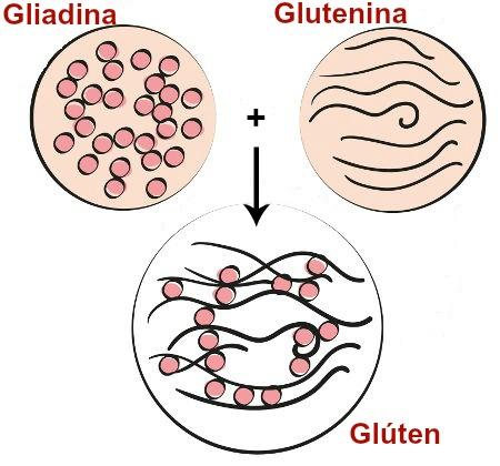 Moléculas de proteína que formam o glúten
