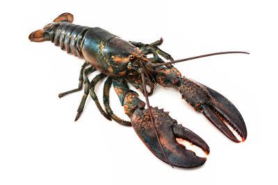 A lagosta é um exemplo de crustáceo