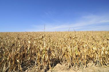 Algumas plantações podem sofrer com a seca ou com anomalias climáticas diversas
