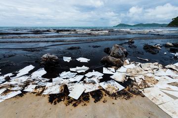 O derramamento de óleo prejudica toda a cadeia alimentar marinha