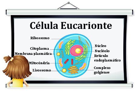 Celula Eucarionte Escola Kids
