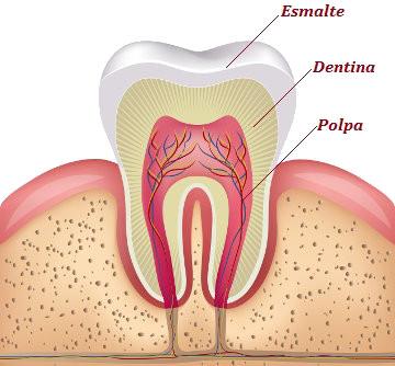 Observe as partes básicas de um dente
