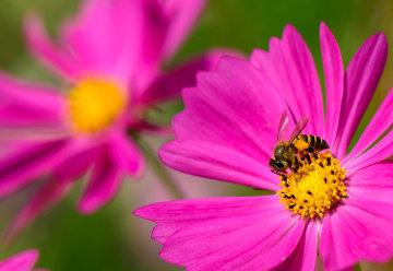 Os polinizadores são atraídos pela coloração e cheiro das flores