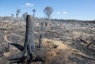 Área florestal destruída pela ação das queimadas