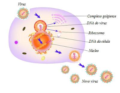 A replicação dos vírus apresenta seis etapas básicas