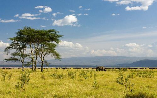 A savana é um dos tipos de vegetação que existem nas regiões de clima tropical