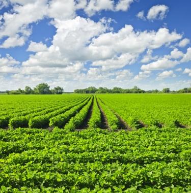 A plantação de soja toma conta do espaço que antes era só Cerrado