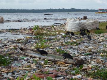 Os urubus ficam frequentemente em locais onde existe grande quantidade de lixo