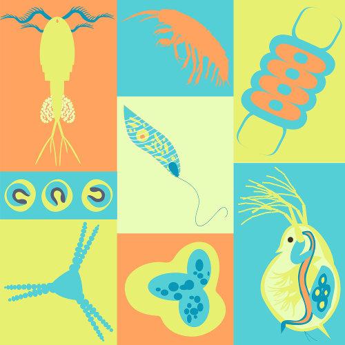 Zooplâncton e fitoplâncton são grupos de plânctons.
