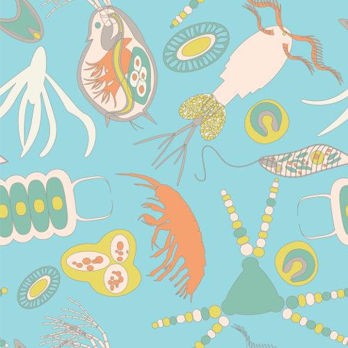 O fitoplâncton e o zooplâncton são componentes do plâncton.
